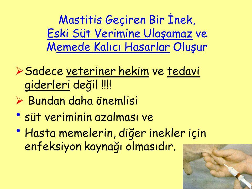 Mastitis Geçiren Bir İnek, Eski Süt Verimine Ulaşamaz ve Memede Kalıcı Hasarlar Oluşur  Sadece veteriner hekim ve tedavi giderleri değil !!!!  Bunda