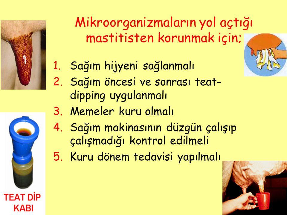 Mikroorganizmaların yol açtığı mastitisten korunmak için; 1.Sağım hijyeni sağlanmalı 2.Sağım öncesi ve sonrası teat- dipping uygulanmalı 3.Memeler kur