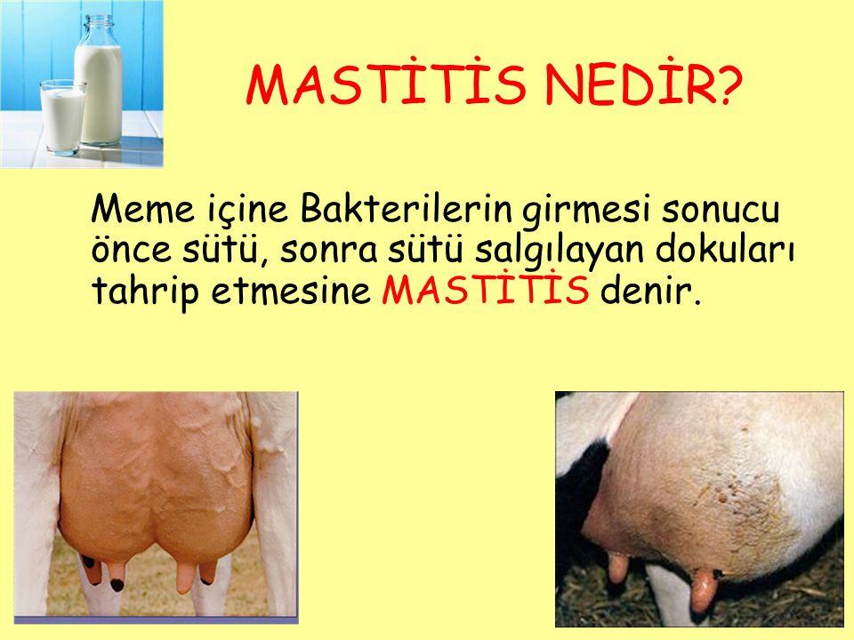 Mastitis Geçiren Bir İnek, Eski Süt Verimine Ulaşamaz ve Memede Kalıcı Hasarlar Oluşur  Sadece veteriner hekim ve tedavi giderleri değil !!!.