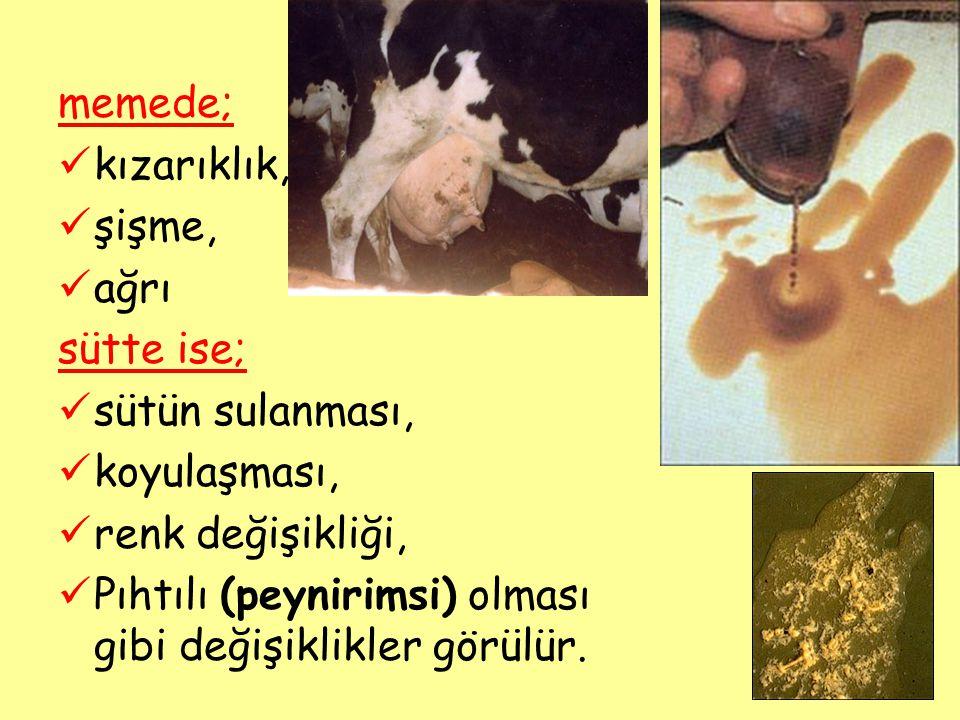 Açık mastitis nedeniyle meydana gelen zarar —Üretimin azalması = %51 20kg süt yerine 10 kg süt alınır —Tedavi süresince sütün dökülmesi = %33 30kg sütün 10 kg' nı dökmüş oluruz.