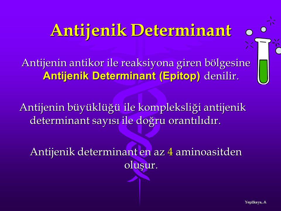 Antijenik Determinant Antijenin antikor ile reaksiyona giren bölgesine Antijenik Determinant (Epitop) denilir. Antijenin büyüklüğü ile kompleksliği an