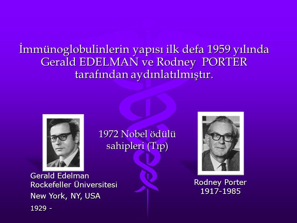 İmmünoglobulinlerin yapısı ilk defa 1959 yılında Gerald EDELMAN ve Rodney PORTER tarafından aydınlatılmıştır. 1972 Nobel ödülü sahipleri (Tıp) Gerald