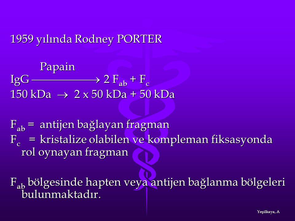 1959 yılında Rodney PORTER Papain Papain IgG  2 F ab + F c 150 kDa  2 x 50 kDa + 50 kDa F ab = antijen bağlayan fragman F c = kristalize olabil