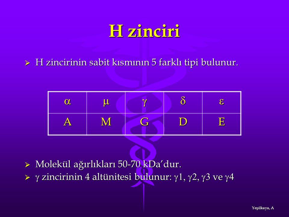 H zinciri  H zincirinin sabit kısmının 5 farklı tipi bulunur.  Molekül ağırlıkları 50-70 kDa'dur.   zincirinin 4 altünitesi bulunur:  ve