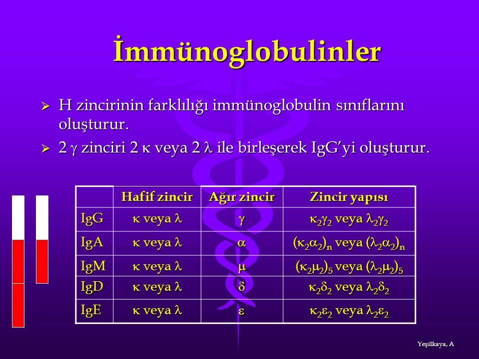 İmmünoglobulinler İmmünoglobulinler  H zincirinin farklılığı immünoglobulin sınıflarını oluşturur.  2  zinciri 2  veya 2 ile birleşerek IgG'yi olu