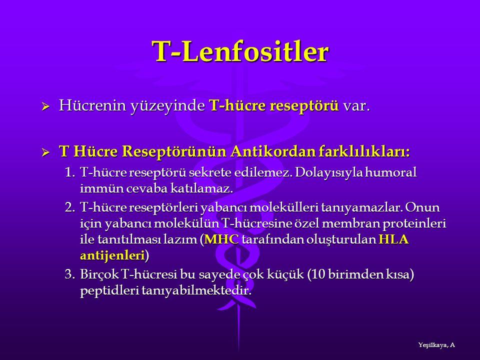 T-Lenfositler  Hücrenin yüzeyinde T-hücre reseptörü var.  T Hücre Reseptörünün Antikordan farklılıkları: 1.T-hücre reseptörü sekrete edilemez. Dolay