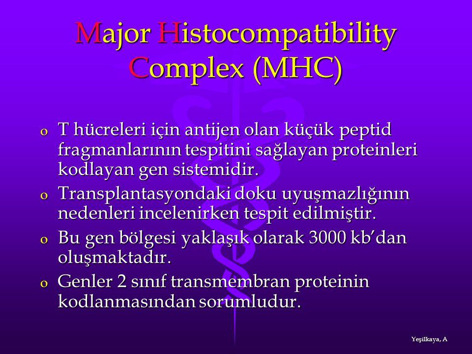 Major Histocompatibility Complex (MHC) o T hücreleri için antijen olan küçük peptid fragmanlarının tespitini sağlayan proteinleri kodlayan gen sistemi