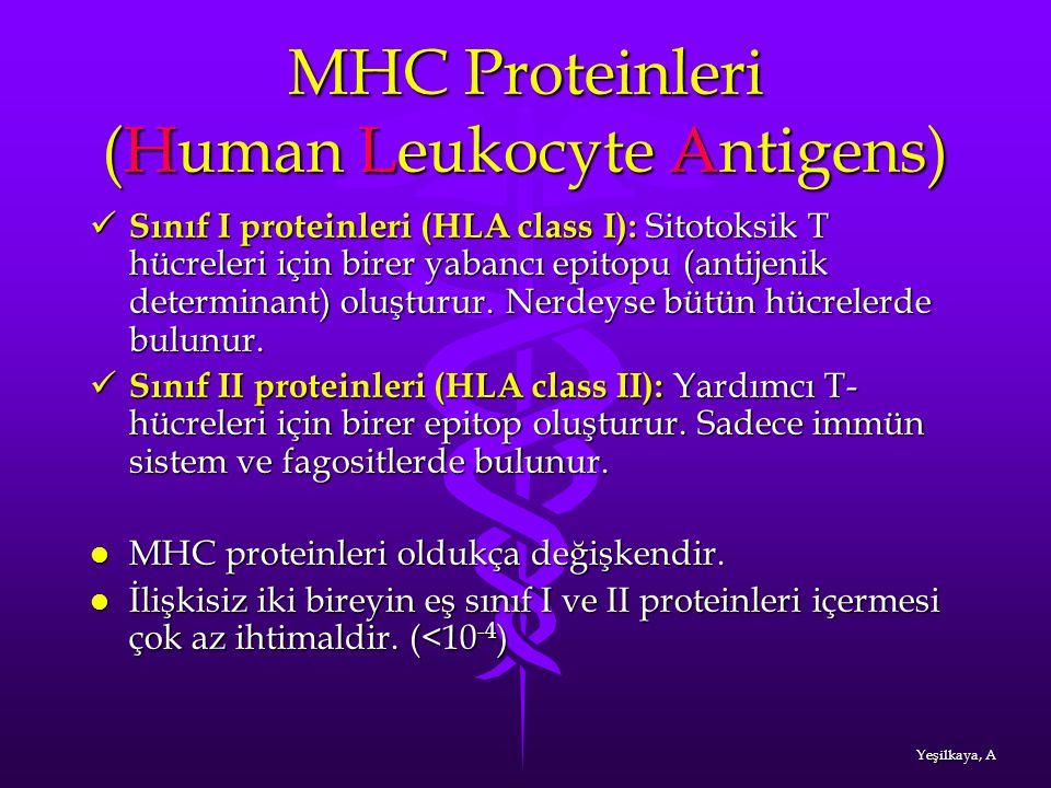 MHC Proteinleri (Human Leukocyte Antigens) Sınıf I proteinleri (HLA class I): Sitotoksik T hücreleri için birer yabancı epitopu (antijenik determinant