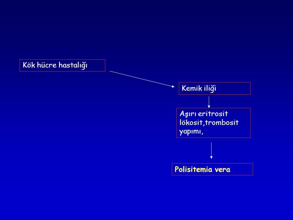 Kemik iliği Aşırı eritrosit lökosit,trombosit yapımı, Kök hücre hastalığı Polisitemia vera