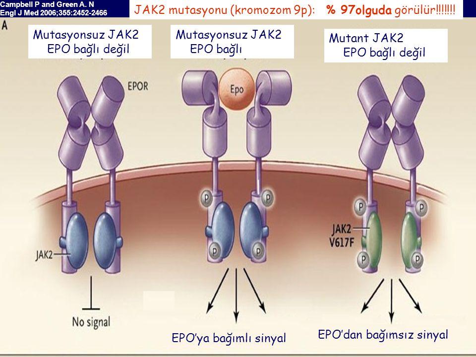 EPO'ya bağımlı sinyal EPO'dan bağımsız sinyal Campbell P and Green A.
