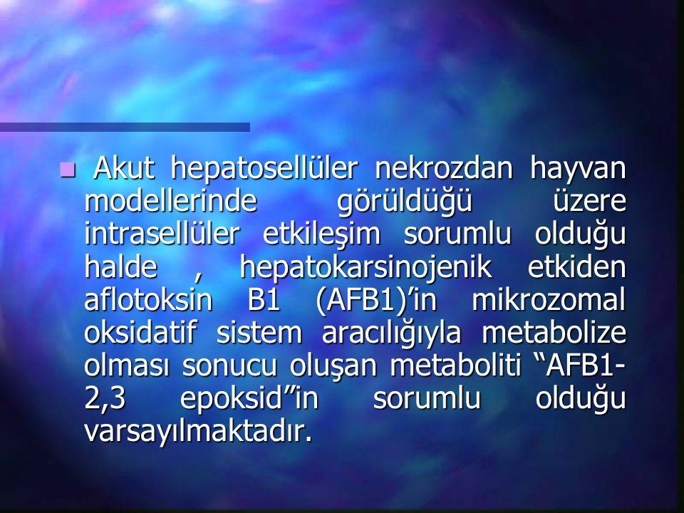 Akut hepatosellüler nekrozdan hayvan modellerinde görüldüğü üzere intrasellüler etkileşim sorumlu olduğu halde, hepatokarsinojenik etkiden aflotoksin
