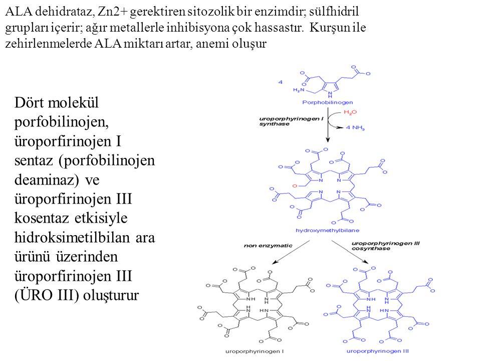 ALA dehidrataz, Zn2+ gerektiren sitozolik bir enzimdir; sülfhidril grupları içerir; ağır metallerle inhibisyona çok hassastır. Kurşun ile zehirlenmele