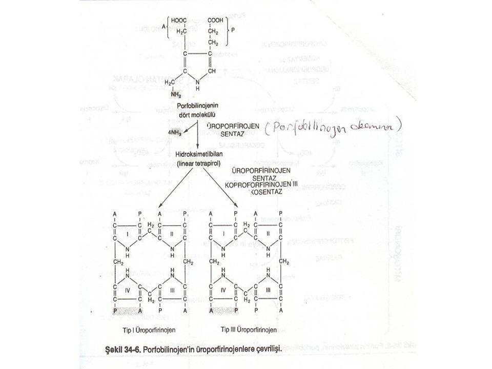 Hem, protoporfirin IX'un tetra pirol halkasının ortasında iki değerlikli Fe atomu içerir.