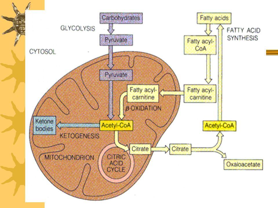  Günde bir insan beyni ~ 100 g glukozu CO 2 ve H 2 O ya oksitler.