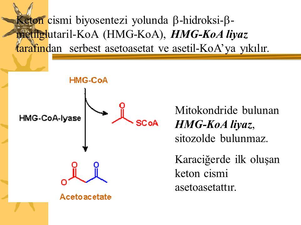 Keton cismi biyosentezi yolunda  -hidroksi-  - metilglutaril-KoA (HMG-KoA), HMG-KoA liyaz tarafından serbest asetoasetat ve asetil-KoA'ya yıkılır. M