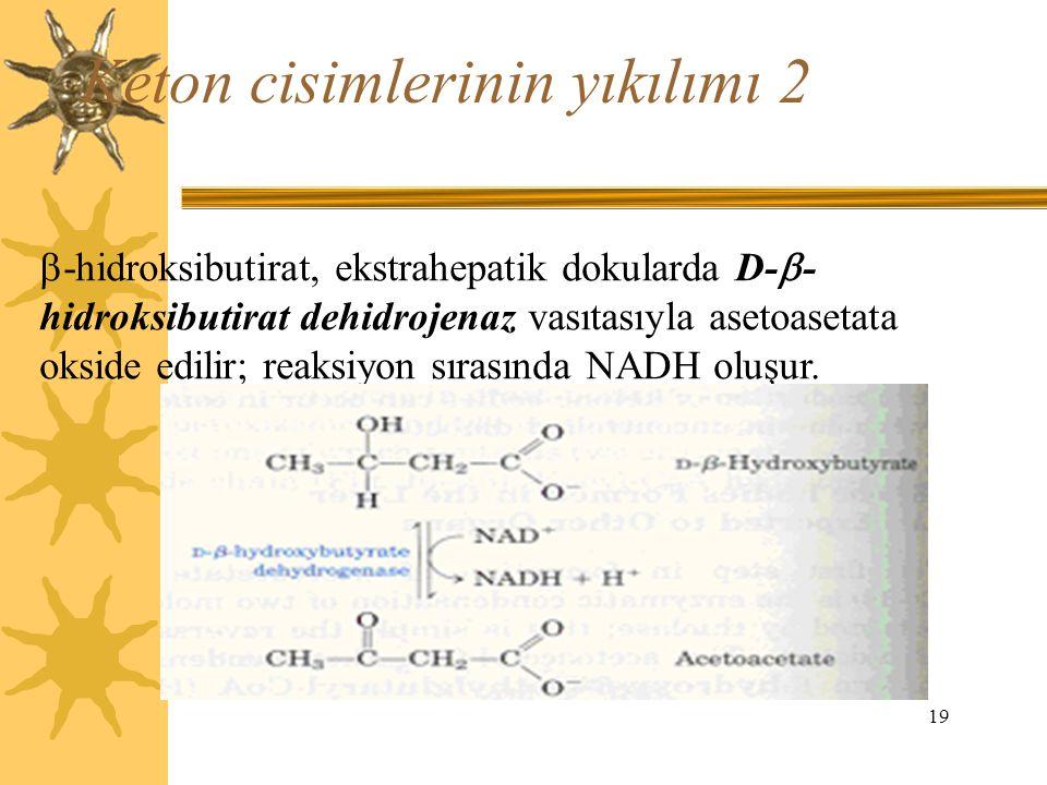 19 Keton cisimlerinin yıkılımı 2  -hidroksibutirat, ekstrahepatik dokularda D-  - hidroksibutirat dehidrojenaz vasıtasıyla asetoasetata okside edili