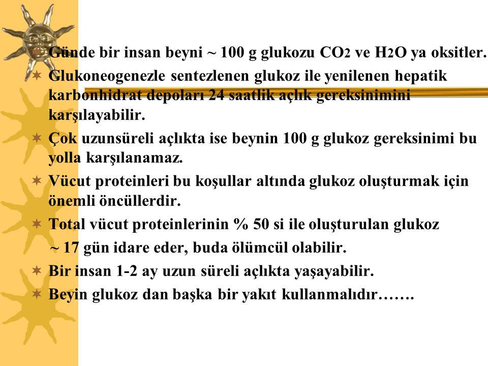  Günde bir insan beyni ~ 100 g glukozu CO 2 ve H 2 O ya oksitler.  Glukoneogenezle sentezlenen glukoz ile yenilenen hepatik karbonhidrat depoları 24