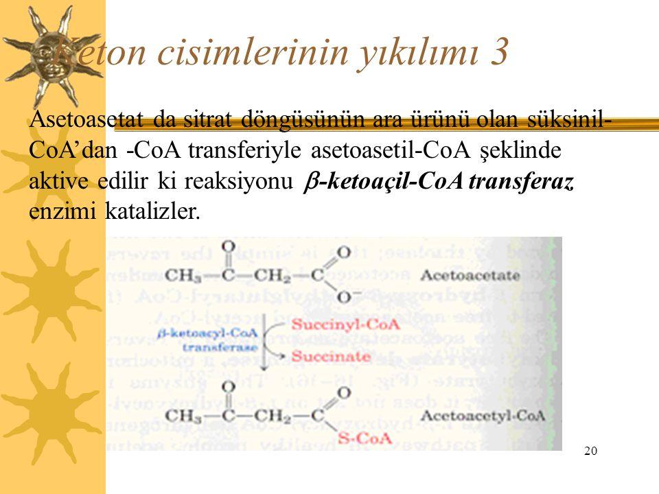 20 Keton cisimlerinin yıkılımı 3 Asetoasetat da sitrat döngüsünün ara ürünü olan süksinil- CoA'dan -CoA transferiyle asetoasetil-CoA şeklinde aktive e