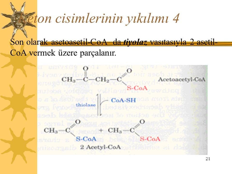 21 Keton cisimlerinin yıkılımı 4 Son olarak asetoasetil-CoA da tiyolaz vasıtasıyla 2 asetil- CoA vermek üzere parçalanır.
