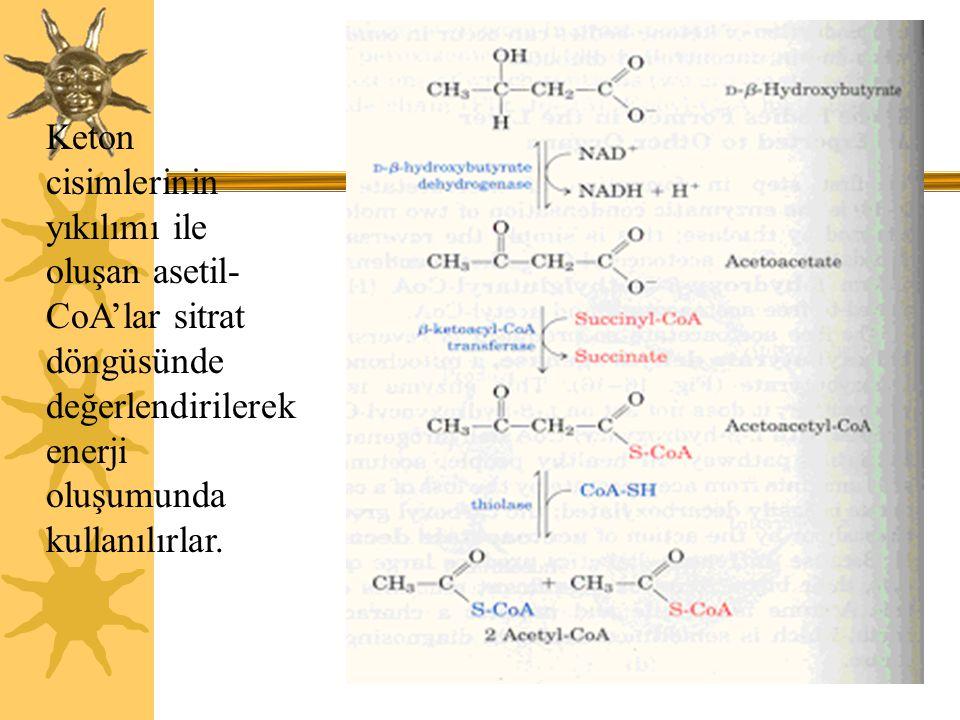 22 Keton cisimlerinin yıkılımı ile oluşan asetil- CoA'lar sitrat döngüsünde değerlendirilerek enerji oluşumunda kullanılırlar.
