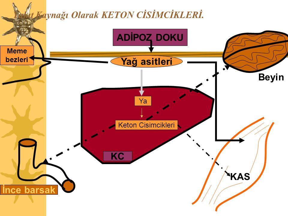 15 Keton cisimlerinin biyosentezi 8 Tedavi edilmemiş diyabetlilerde, fazla miktarda oluşan asetoasetat, spontan olarak veya asetoasetat dekarboksilaz etkisiyle karboksil grubunu kaybeder ve önemli miktarda aseton oluşur.