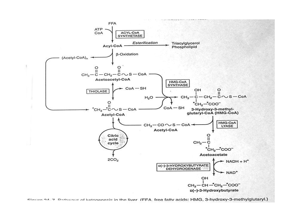 8 Keton cisimlerinin biyosentezi 2 Uzamış açlıkta karaciğerde ilk oluşan keton cismi asetoasetattır.