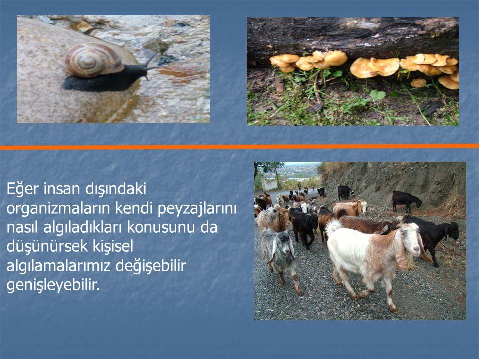 Doğa olarak Peyzaj Doğa olarak Peyzaj Habitat olarak Peyzaj Habitat olarak Peyzaj Sanat eseri olarak peyzaj Sanat eseri olarak peyzaj Sistem olarak peyzaj Sistem olarak peyzaj Problem olarak Peyzaj Problem olarak Peyzaj Varlık (zenginlik) olarak Peyzaj Varlık (zenginlik) olarak Peyzaj İdeoloji olarak Peyzaj İdeoloji olarak Peyzaj Tarih olarak Peyzaj Tarih olarak Peyzaj Yer olarak Peyzaj Yer olarak Peyzaj Estetik olarak Peyzaj (Meinig 1979; Ogrin 2005).