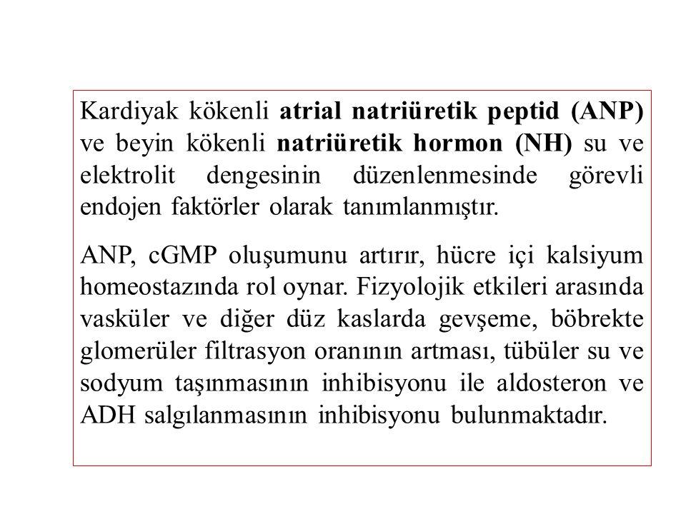 Kardiyak kökenli atrial natriüretik peptid (ANP) ve beyin kökenli natriüretik hormon (NH) su ve elektrolit dengesinin düzenlenmesinde görevli endojen