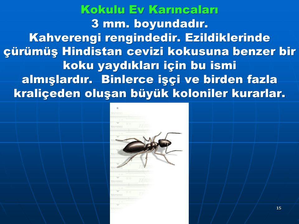 Kokulu Ev Karıncaları 3 mm. boyundadır. Kahverengi rengindedir.