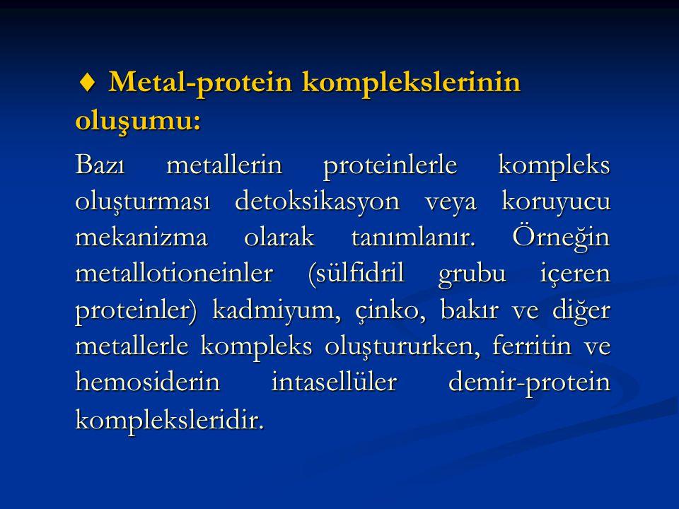  Metal-protein komplekslerinin oluşumu: Bazı metallerin proteinlerle kompleks oluşturması detoksikasyon veya koruyucu mekanizma olarak tanımlanır.