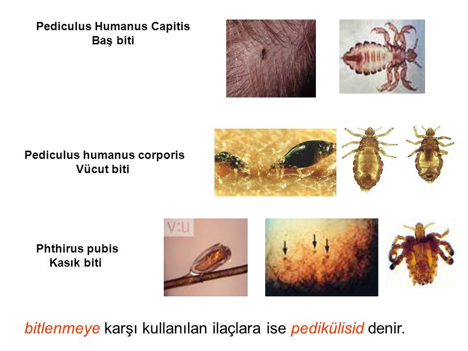 Pediculus Humanus Capitis Baş biti Pediculus humanus corporis Vücut biti Phthirus pubis Kasık biti bitlenmeye karşı kullanılan ilaçlara ise pedikülisi
