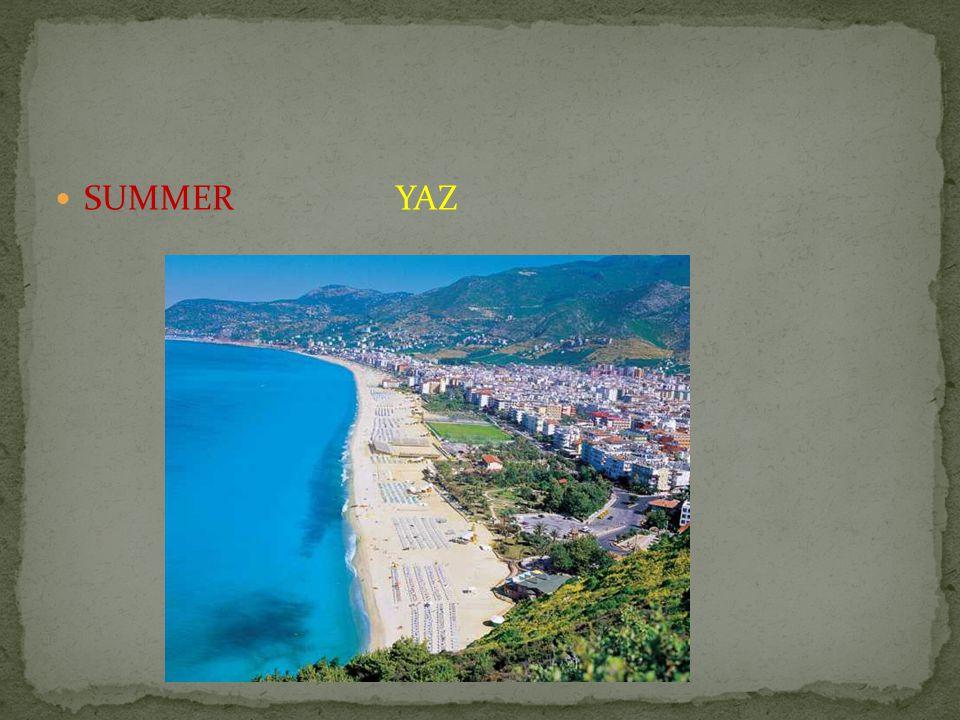 SUMMER YAZ
