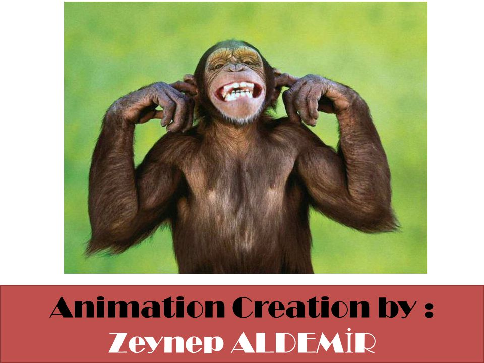 Animation Creation by : Zeynep ALDEM İ R