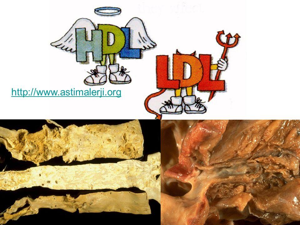 Nikotin damar duvarında değişiklikler yapar Damarlar üzerine sigaranın etkileri; Zararlı kolesterolde yükselme Damar duvarlarında yağlı plakların oluşumu Kan akışkanlığının azalması sonucu damarların tıkanması http://www.astimalerji.org