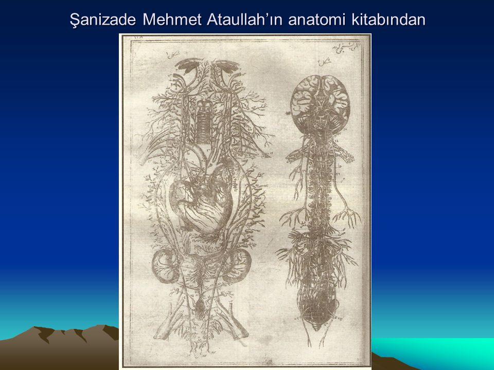 Şanizade Mehmet Ataullah'ın anatomi kitabından