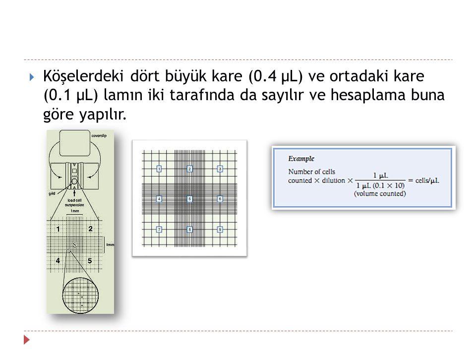  Köşelerdeki dört büyük kare (0.4 µL) ve ortadaki kare (0.1 µL) lamın iki tarafında da sayılır ve hesaplama buna göre yapılır.