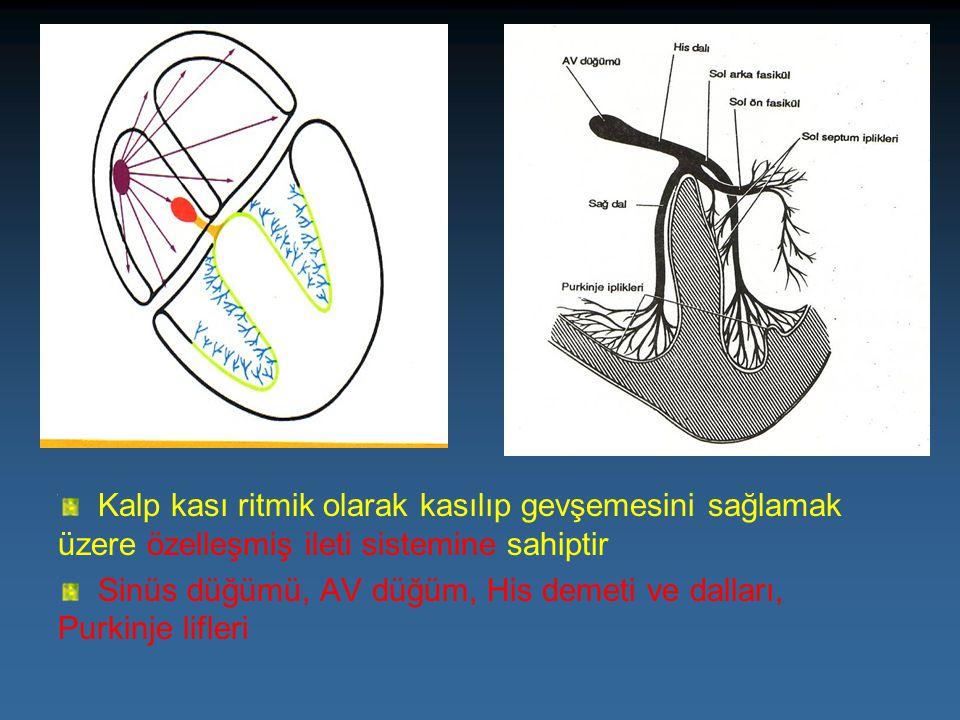 Kalp kası ritmik olarak kasılıp gevşemesini sağlamak üzere özelleşmiş ileti sistemine sahiptir Sinüs düğümü, AV düğüm, His demeti ve dalları, Purkinje