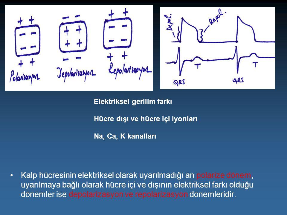 Kalp hücresinin elektriksel olarak uyarılmadığı an polarize dönem, uyarılmaya bağlı olarak hücre içi ve dışının elektriksel farkı olduğu dönemler ise