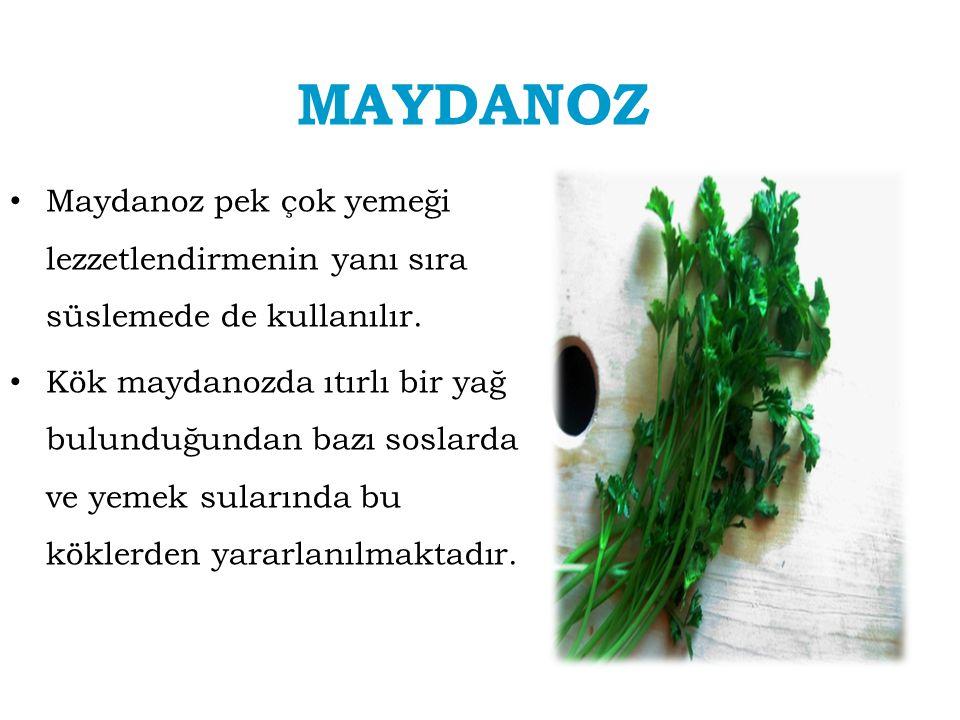 MAYDANOZ Maydanoz pek çok yemeği lezzetlendirmenin yanı sıra süslemede de kullanılır. Kök maydanozda ıtırlı bir yağ bulunduğundan bazı soslarda ve yem
