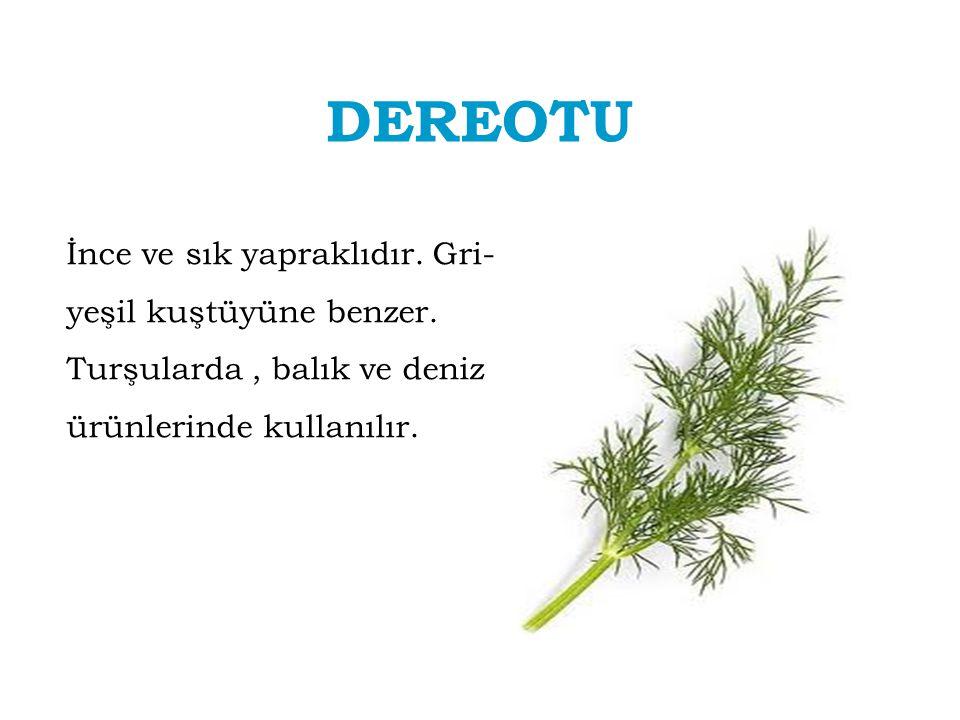 DEREOTU İnce ve sık yapraklıdır. Gri- yeşil kuştüyüne benzer. Turşularda, balık ve deniz ürünlerinde kullanılır.