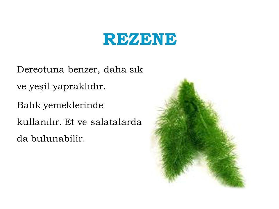 REZENE Dereotuna benzer, daha sık ve yeşil yapraklıdır. Balık yemeklerinde kullanılır. Et ve salatalarda da bulunabilir.