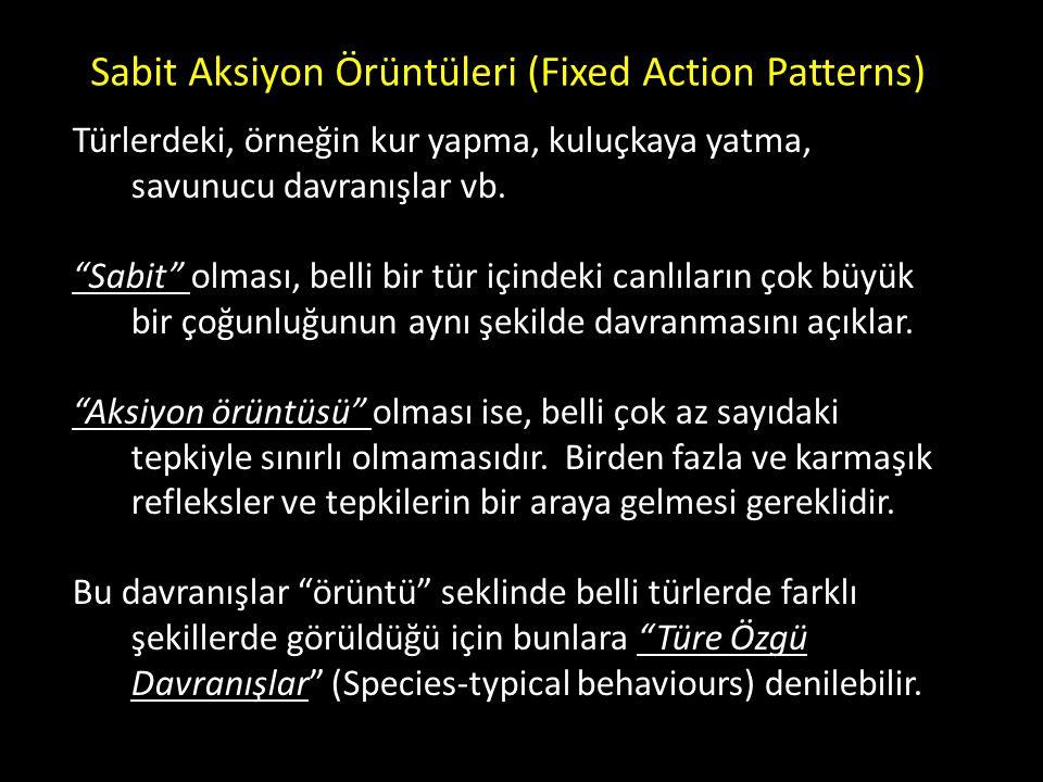 """Sabit Aksiyon Örüntüleri (Fixed Action Patterns) Türlerdeki, örneğin kur yapma, kuluçkaya yatma, savunucu davranışlar vb. """"Sabit"""" olması, belli bir tü"""