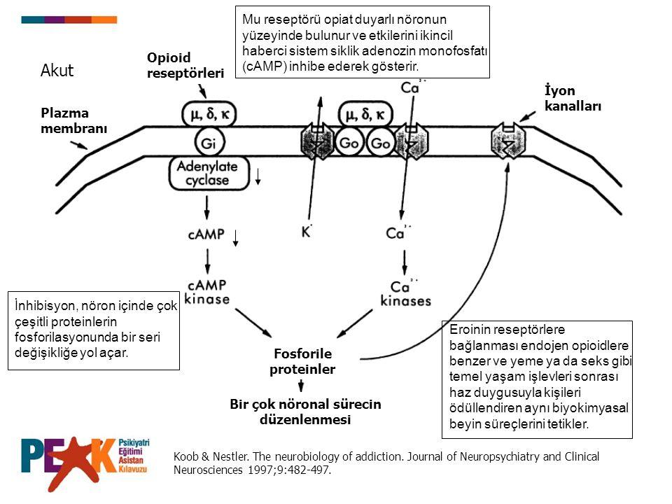 Koob & Nestler. The neurobiology of addiction. Journal of Neuropsychiatry and Clinical Neurosciences 1997;9:482-497. Plazma membranı Opioid reseptörle