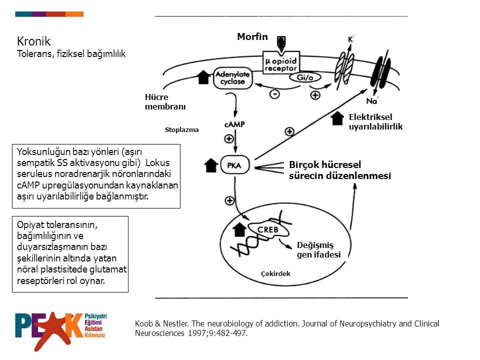 Koob & Nestler. The neurobiology of addiction. Journal of Neuropsychiatry and Clinical Neurosciences 1997;9:482-497. Değişmiş gen ifadesi Morfin Hücre