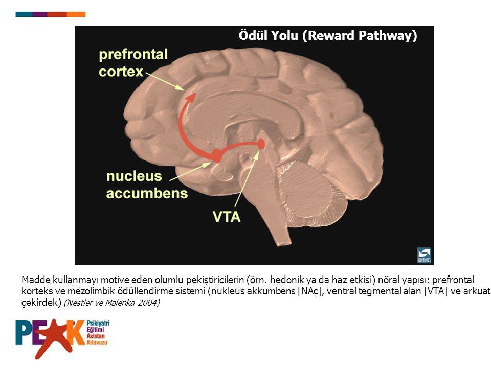 Ödül Yolu (Reward Pathway) Madde kullanmayı motive eden olumlu pekiştiricilerin (örn. hedonik ya da haz etkisi) nöral yapısı: prefrontal korteks ve me