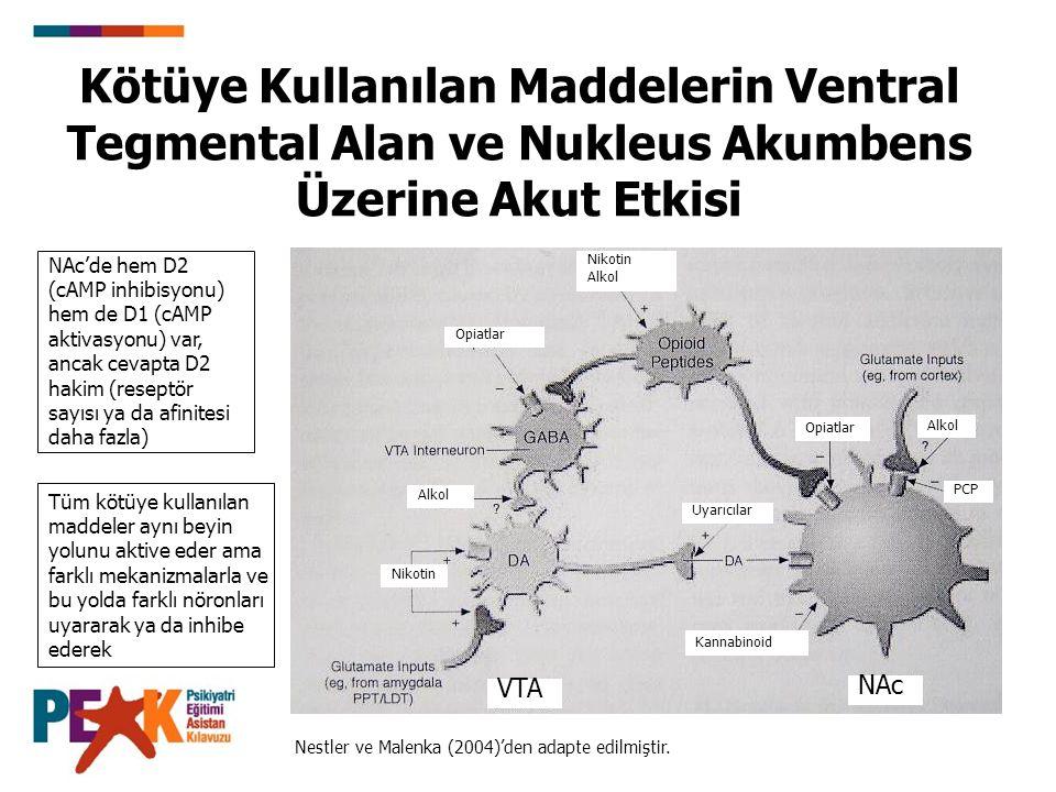 Kötüye Kullanılan Maddelerin Ventral Tegmental Alan ve Nukleus Akumbens Üzerine Akut Etkisi Nestler ve Malenka (2004)'den adapte edilmiştir. Nikotin A