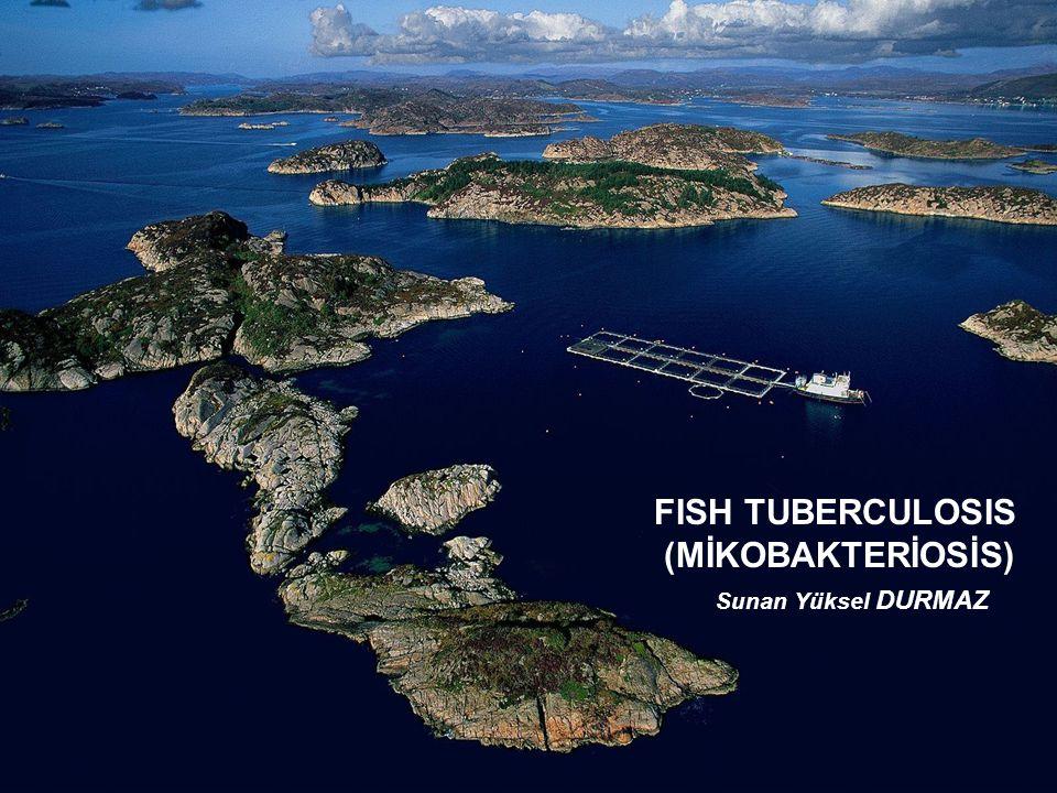 FISH TUBERCULOSIS (MİKOBAKTERİOSİS) Sunan Yüksel DURMAZ