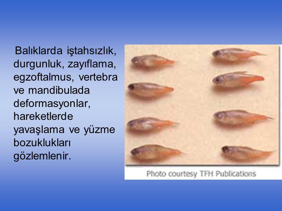 Balıklarda iştahsızlık, durgunluk, zayıflama, egzoftalmus, vertebra ve mandibulada deformasyonlar, hareketlerde yavaşlama ve yüzme bozuklukları gözlem