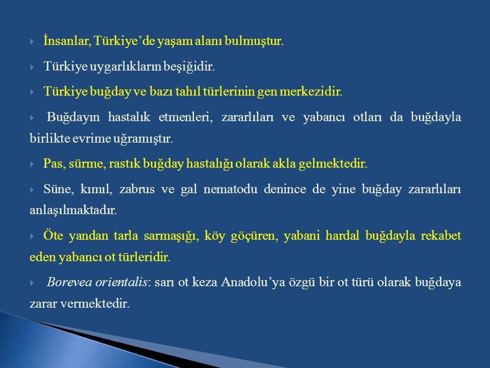  İnsanlar, Türkiye'de yaşam alanı bulmuştur.  Türkiye uygarlıkların beşiğidir.  Türkiye buğday ve bazı tahıl türlerinin gen merkezidir.  Buğdayın