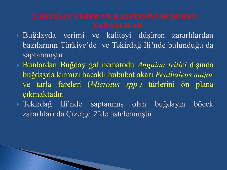 2. BUĞDAY VERİM VE KALİTESİNİ DÜŞÜREN ZARARLILAR  Buğdayda verimi ve kaliteyi düşüren zararlılardan bazılarının Türkiye'de ve Tekirdağ İli'nde bulund